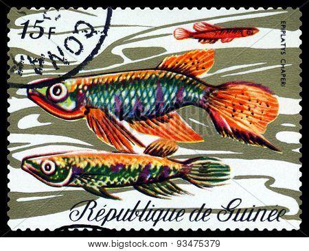 Vintage  Postage Stamp. Fish Epiplatys  Chaperi.