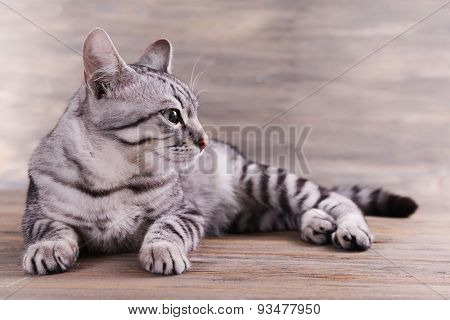 Beautiful cat on wooden background