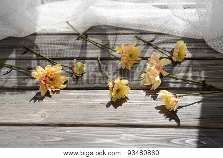 Beautiful chrysanthemums on wooden background