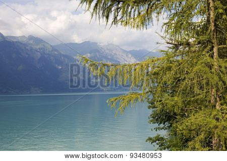 Alpine lake Brienz of Jungfrau region, viewed from Iseltwald in Switzerland