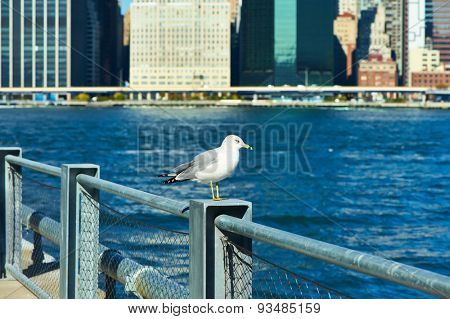 Seagull with Manhattan skyline in background, New York City. Focus on the bird.
