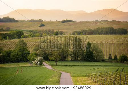 Path in vineyards in Pfalz at sunset, Germany