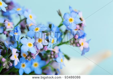 Forget-me-nots flowers on blue background