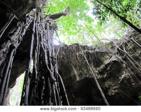 Cave opening with vines - Jamaica