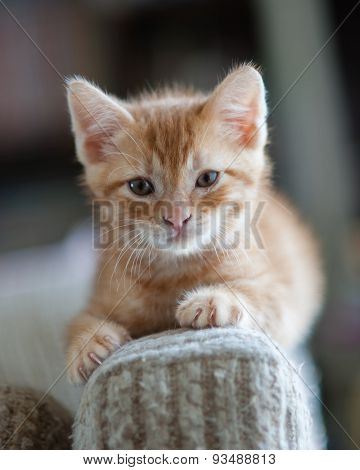 Kitten on the couch