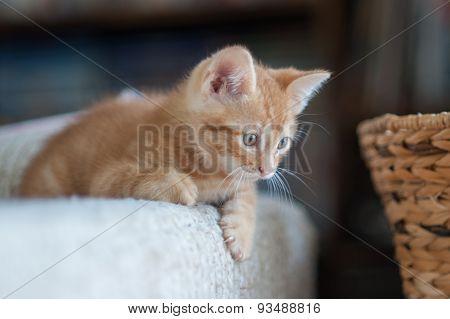 Little kitten looking to play