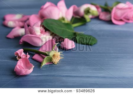 Beautiful pink petals of roses on color wooden table, closeup