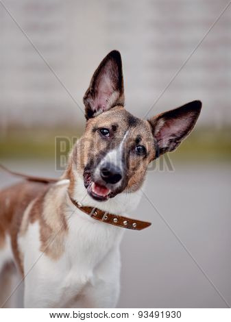 Portrait Of A Cheerful Domestic Dog