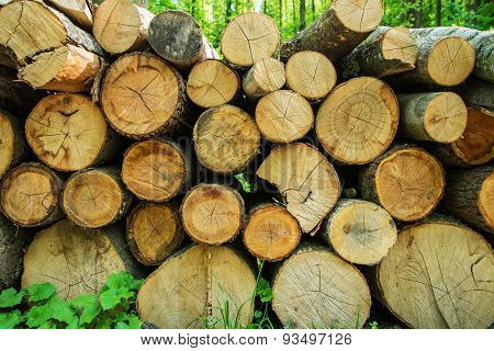 Pile Of Fresh Timber