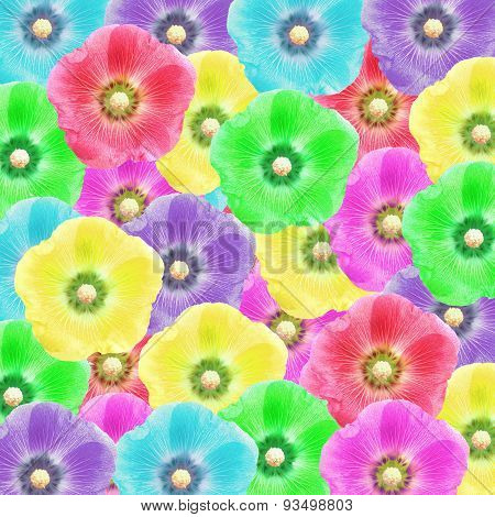 Exotic Color Hollyhock Flower