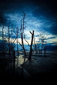 stock photo of tide  - Dead forest and muddy beach at twilight low tide - JPG