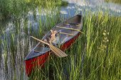 stock photo of corgi  - Corgi dog in a red canoe with a wooden paddle on lake shore with green vegetation - JPG