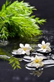 pic of gardenia  - Still life with  gardenia with green plant on black pebbles  - JPG