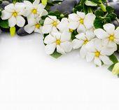 image of gardenia  - Set of gardenia with green plant on black pebbles  - JPG