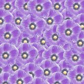 picture of hollyhock  - exotic purple color hollyhock flower as nature background - JPG