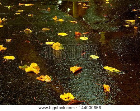 Fallen yellow leaves during autumn on wet asphalt walkway during rainy weather