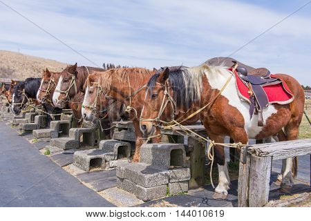 Sports Horses For Racing In The Stalls