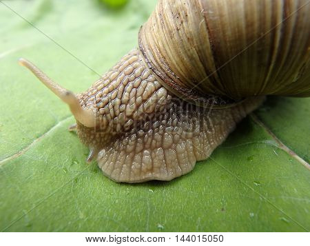 Snail with house , snail , background,