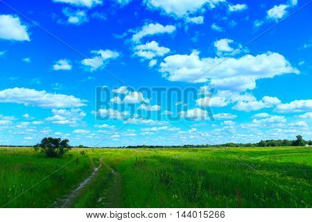 Country road in the summer field with white clouds on the blue sky