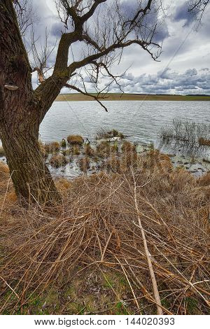 Cloudy weather over the lake. Dry reed and old branches at foreground