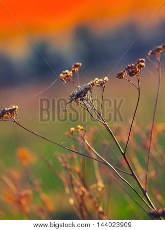 Dried flowers and plants on a background sunset. Shallow depth of field
