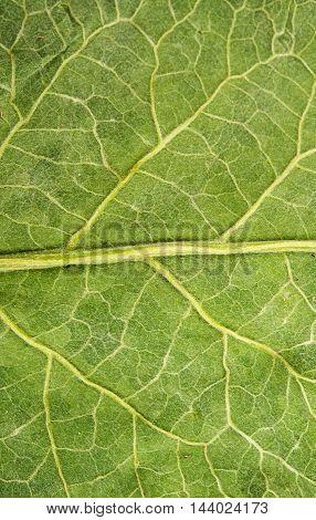 burdock leaf seasons, square, structur, surface texture
