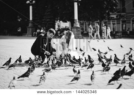 wedding couple and many street pigeons at wedding