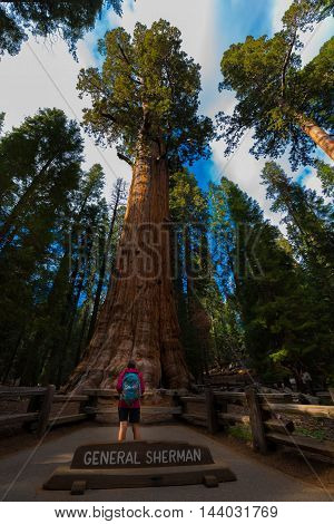 Hiker, Admiring Giant Sequoia Trees General Sherman