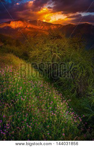 Castle Rock Clover Flowers Sequoia National Park Sunset Vertical
