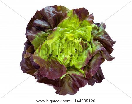 Purple green lettuce salad head top view isolated on white
