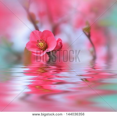 Beautiful flowers reflected in the water, spa concept...