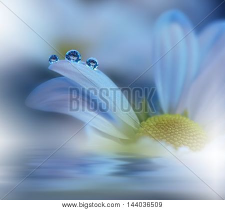 Beautiful flowers reflected in the water, spa concept.Postcard. Blue Background.
