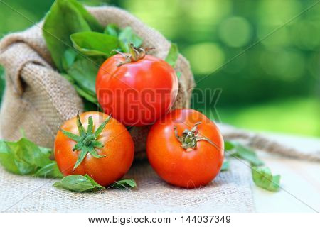 Three Cherry tomatoes in a row on a burlap cloth with basil leaves and shallow depth of field copy space