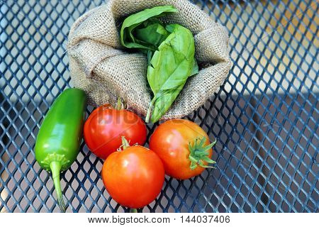 Red cherry tomatoes basil leaves and Jalapeno peppers on a metal background