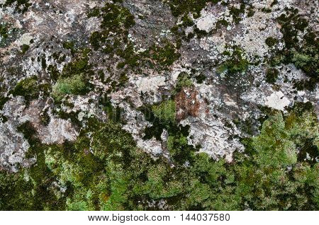 Mossy Stone Texture