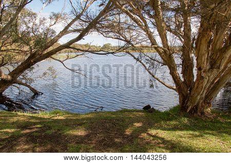 Peaceful Herdsman lake waters with treed wetlands under a blue sky in Western Australia.