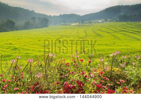Good morning Green Terraced Rice Field in Mae Klang Luang Mae Chaem Chiang Mai Thailand