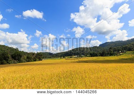 Sunshine Day at Green Terraced Rice Field in Mae Klang Luang Mae Chaem Chiang Mai Thailand