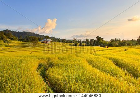 Sunset at Terraced Paddy Field in Mae-Jam Village Chiang Mai Province Thailand