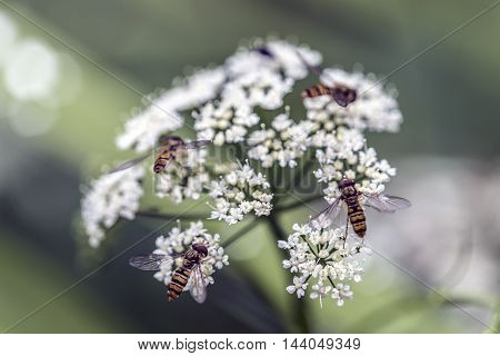 insects on a compound white flower outdoor macro closeup