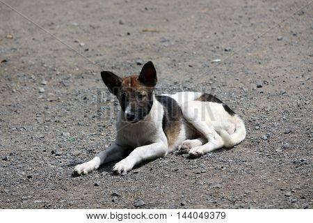 Thai dog resting on  the street ,