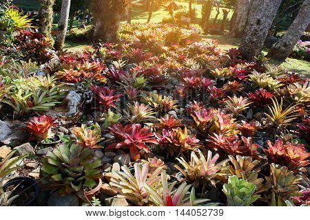 Tropical Rain forest Landscape in southeast asia