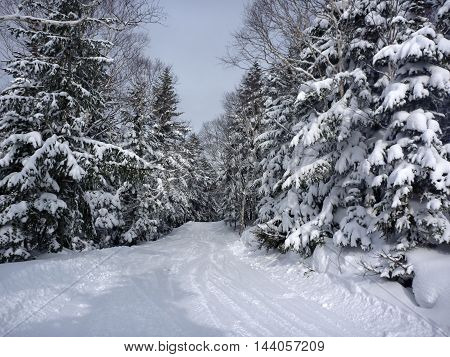 Winter landscape with fir trees in the snow and the winter road with traces of skis and snowboards