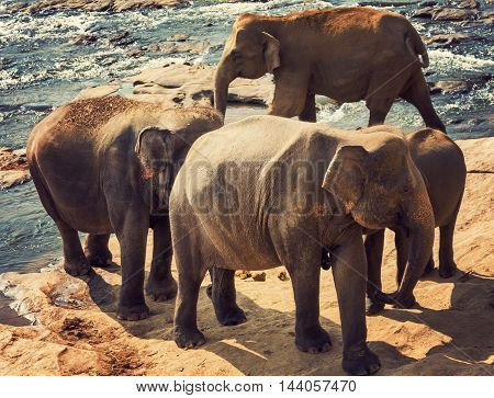 Elephants Attraction River