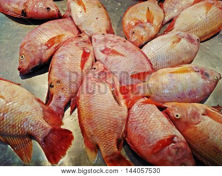 Red Tilapia fish frozen sold in market or supermarket.