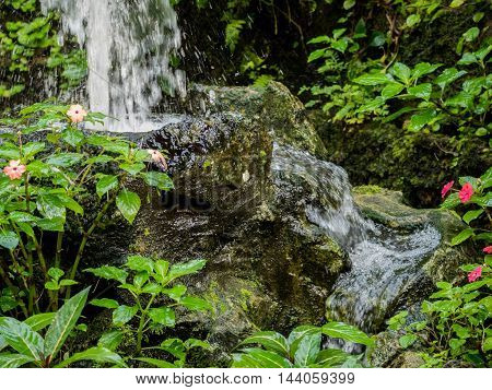 Small and beautifull tropical garden with plants and waterfall
