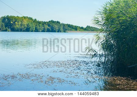Peaceful water with reeds on a lake shore