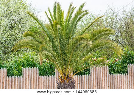 Picture of a beautiful palm tree in the background a blue sunny sky