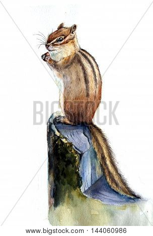 Watercolor hand drawn chipmunk. Isolated organic natural eco illustration on white background