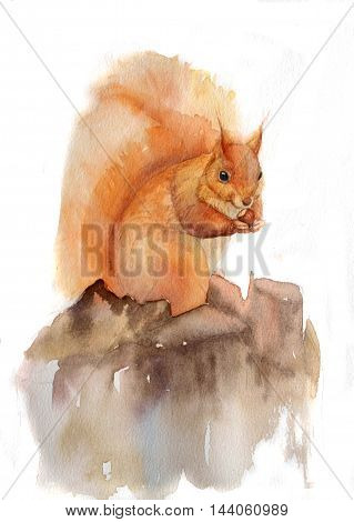 Watercolor hand drawn squirrel. Isolated organic natural eco illustration on white background